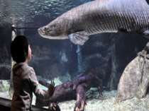 世界淡水魚水族館「アクア・トトぎふ」入館券付プラン