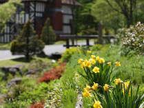 雪解けにつれて、春の花々があちこちでほころびはじめます