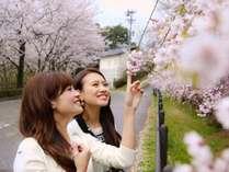 【真菰ヶ池のしだれ桜】4月の春爛漫♪当館より徒歩2分
