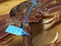 ◆青タグ付ブランド【加能蟹(かのうがに)×極上蟹づくし】一期一会の蟹と、北陸の地酒を利き酒で愉しむ
