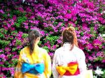 GW前後が見頃♪春の庭を彩る色とりどりの「つつじの花」が垣根20m程続きます。