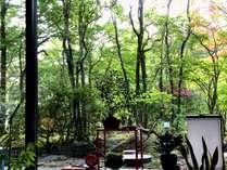 美しい緑に包まれ森林浴の一時を・・・【ロビーラウンジ花邑】営業時間/7:30~10:00、15:00~18:00