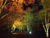 香雪園ライトアップ【紅葉】