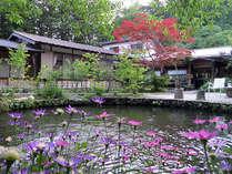 いわなが釣れる庭の池と玄関。木曽の大自然の中の天然温泉の貸切宿へようこそ。