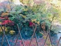 秋には対岸の紅葉を望む(立ち湯からの眺め)