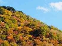 秋には客室から美しい紅葉を一望♪