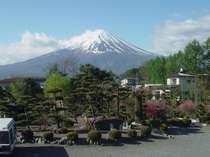 お部屋からの富士山です。