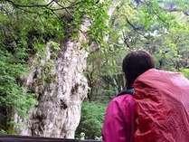 縄文杉や白谷雲水峡のトレッキングがセットになったお得なプラン「RAKUSAパック」