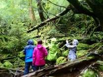 白谷雲水峡「苔むす森」