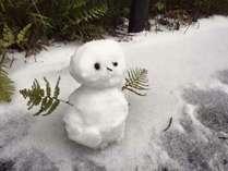 冬の屋久島へようこそ!