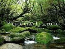 ~世界自然遺産の島~【屋久島】へ遊びにきませんか!