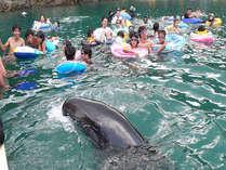 【ファミリー】【バイキング】クジラと泳ぐ夏休み♪勝浦温泉に泊まって太地に行こう!