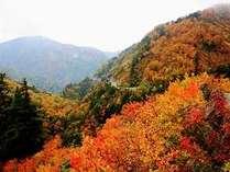 【秋の感動体験】★紅葉★白川郷×ホワイトロード×秋の味覚キノコのホイル包み焼