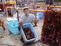 網からはづした朝採りのピチピチ伊勢エビは新鮮その物。料理方法を選択して召し上がってください。