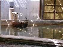大浴場の奥にある露天風呂です。源泉の湯が湧き出ています。