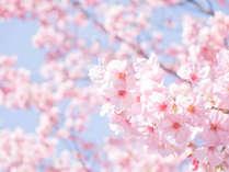 【花見☆特典付!】肥前さくらポークで春を先取り♪55年かけて作り上げた庭園で花見を楽しむ。