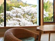 【喜寿】春にはお部屋から庭の桜を楽しめます♪