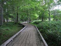 湯ノ湖畔の散策コースは遊歩道が整備されています。