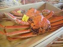 茹でたての蟹