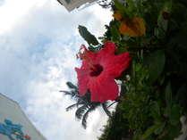 【女子会】南の楽園!オーシャンビューのお部屋 満天の星空☆満喫♪2食付