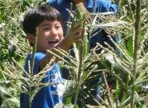 新鮮とうもろこし無料収穫体験付き!!清里高原で過ごす家族の夏休み 1泊2食付き