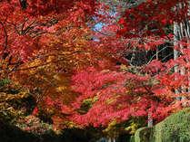 清々しい空気の中、美しい紅葉を観賞して心癒される一時