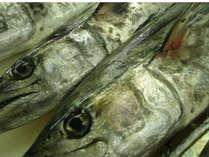 【10月~11月限定】答志島ブランド★一本釣り★旬のサワラを食べよう♪♪