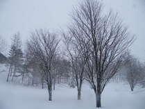 前庭の真冬の三本桜②