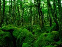 原生林と苔の森