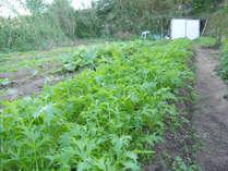 安心安全な自家栽培のお野菜を使用しています!