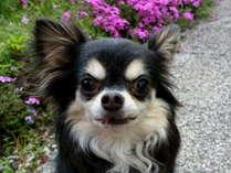 ◆愛犬(無料)と泊まる★Bフ°ラン洋室1人¥14000◆11月~12/23★飛騨牛リブロースステーキ+無料貸切温泉