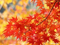 秋プランです♪