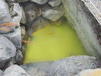 源泉:竜泉の湯