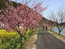 ピンクと黄色のコントラストがとても美しい2月の南伊豆