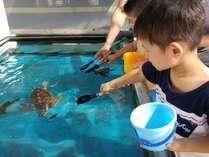 【2019年】目指せ!未来のウミガメ博士ウミガメ飼育員さんのお仕事体験を別途追加でお申込出来るプラン