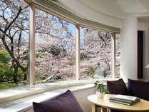 プレミアコーナーツインの窓から見える桜の景色※開花の時期・客室により見え方が異なります。