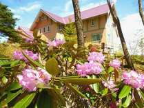 石楠花と外観