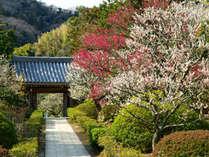 浄妙寺の紅白梅