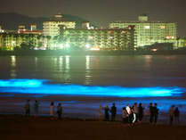 海のオーロラ【夜光虫】が青く輝き幻想的な由比ヶ浜