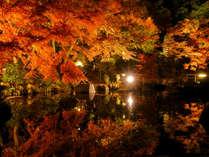紅葉ライトアップ(長谷寺)
