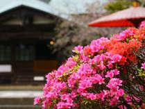 ツツジ咲く海蔵寺