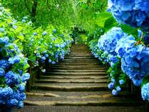神秘的な青!「明月院ブルー」