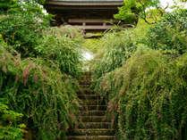 ハギのトンネル~海蔵寺