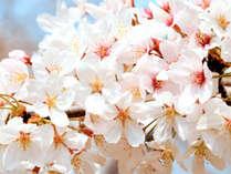 春うらら…横手城&錦秋湖のほとりで感じる春の訪れ≪お花見プラン≫