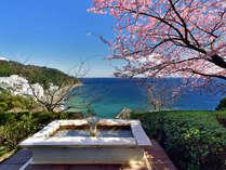 ロビーからの眺め(足湯と桜)2月河津桜の時期