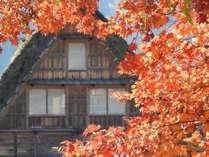 真っ赤なモミジと茅葺き屋根が映える秋の白川郷