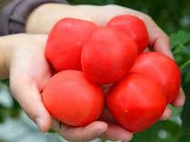 朝食で味わえる松島トマトの搾りたてジュースは大人気!