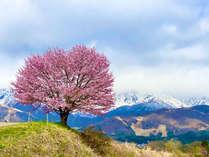 信州の春~桜の風景~