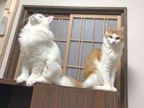 【ペットと泊まれる!】季節の食材を使った定番プラン!貸切風呂無料【2食付】