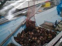 店主の漁の様子